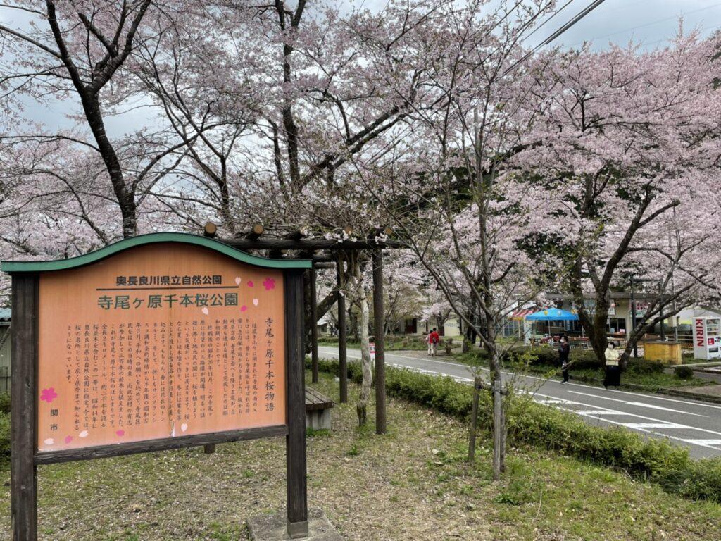 寺尾ヶ原千本桜公園の桜 2021年4月3日
