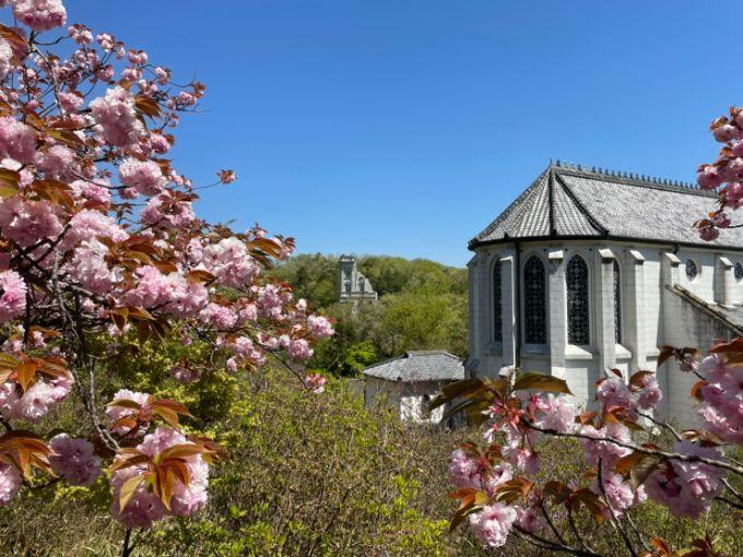 明治村の八重桜